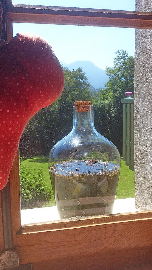 Liqueur de fenouil du jardin