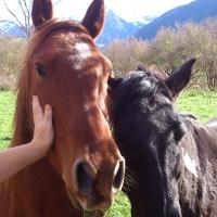 Nos voisins les chevaux